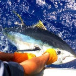 Ahi Tagging Project