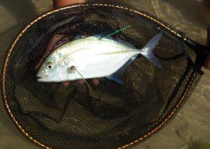 tagged omilu 7-29-16